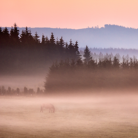 Lonely Horse, Winterberg, Sauerland, Germany, 2011