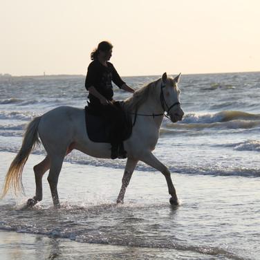 Paardrijden, strand, Zeeland.JPG