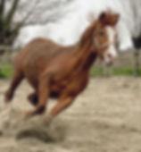 Ellie, paard huren