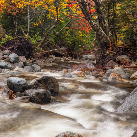 Into the Wild, High Peaks Wilderness, Adirondacks, USA