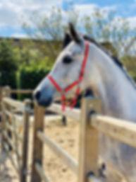 Endeavor, paarden huren, stal Het Zoete Peerd