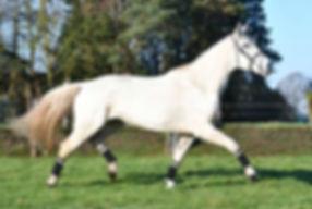 Calysta, pony huren, stal Het Zoete Peerd