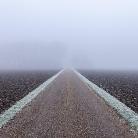 Farm in the Mist, Zeeuws-Vlaanderen, The Netherlands