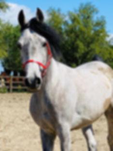 Endeavor, paarden leasen, stal Het Zoete Peerd