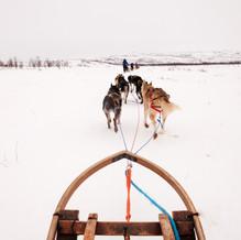 Husky Tour, Tana Bru, Norway