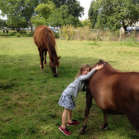Paard knuffelen