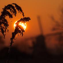 Through the Reeds, Kinderdijk, Zuid-Holland, The Netherlands