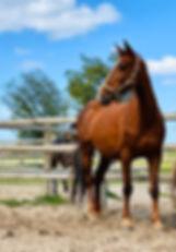 Alani, paarden leasen, stal Het Zoete Peerd