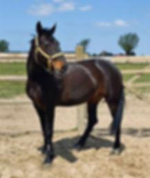Queeny, paarden leasen, stal Het Zoete Peerd