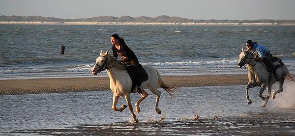 Paardrijden Zeeuws-Vlaanderen, strandrit