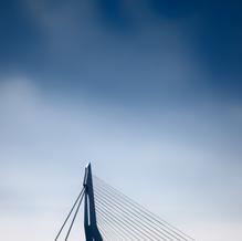 Swan, Erasmusbrug, Rotterdam, Netherlands, 2018