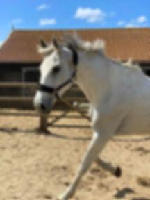 Calysta, paarden leasen, stal Het Zoete Peerd
