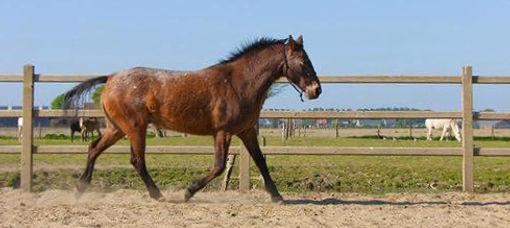 Bounty, leuke pony te koop