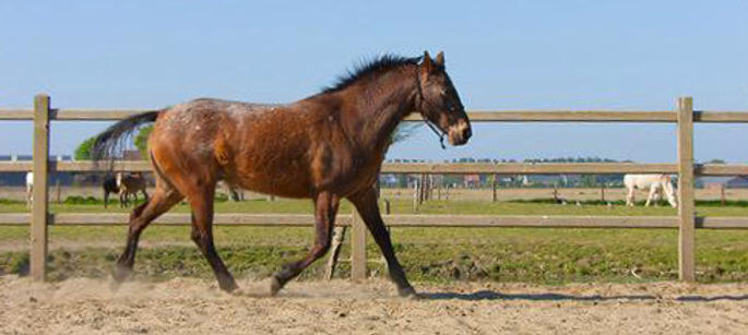 Bounty, paard huren