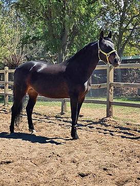 Queeny, paarden leasen