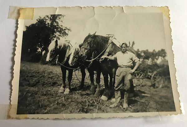 Paarden op het land met oud bewoner d'Eierkurf