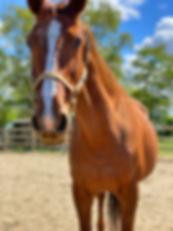 Alani, paard huren, stal Het Zoete Peerd