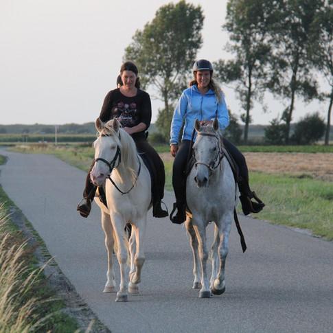 Polderrit, Zeeland, paardrijden.JPG