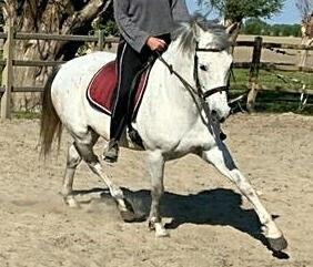Paard leasen.jpg