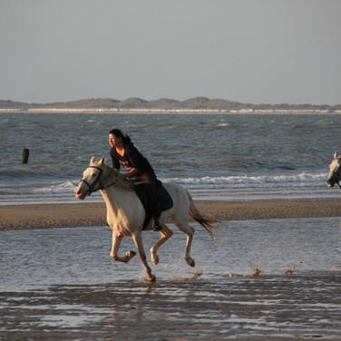 Paardrijden in Zeeland, galopperen over
