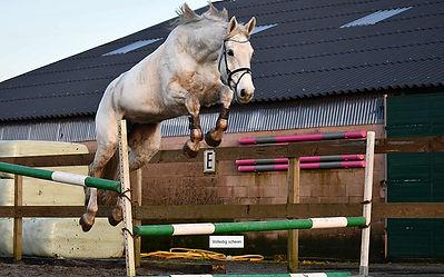 Calysta, paard huren