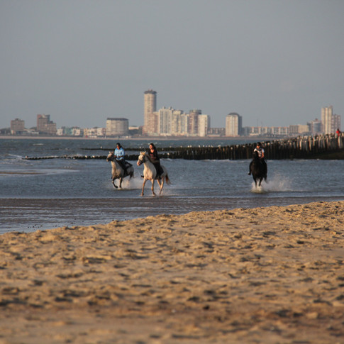 Paardrijden langs strand Zeeuws-Vlaander