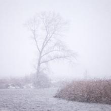 Tree in Snow Storm, Nieuwkerksche Kreek, Groede, The Netherlands