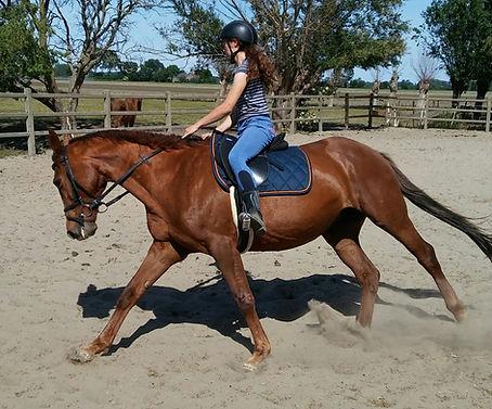 Alani, paard, te koop.jpg