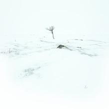 Loneliness, Nuorgam Tundra, Lapland, Finland