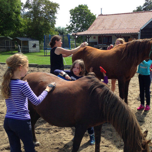 Paarden verzorgen