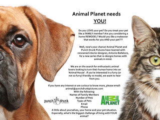 Animal Planet is looking for you!