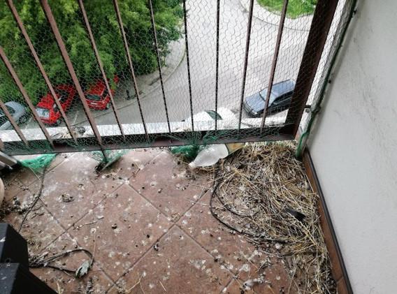 sprzatanie-balkonow-po-golebiach-sokolni