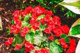 OO Garden Tour 2018 #6-42hh.jpg