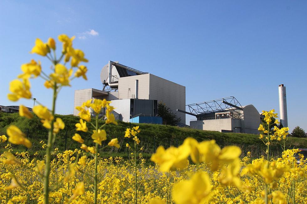 vue usine Monthyon colza (1).JPG