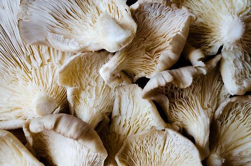 PLANTE_mushroom_funghi_veg_food_restaura