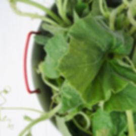 PLANTE_tenerumi_veg_plantevegmood_restau