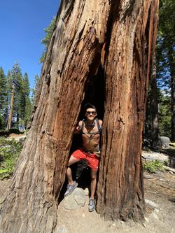 Huge Hallow Tree