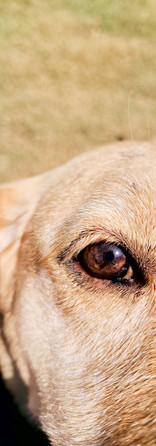 Goldie's close up