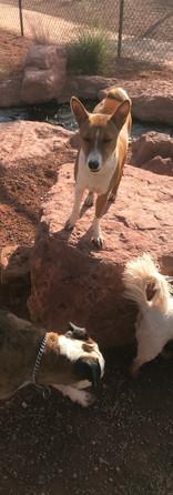 Doggie PlayCamp