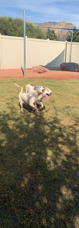 Spock and his sister Beya playing in the yards