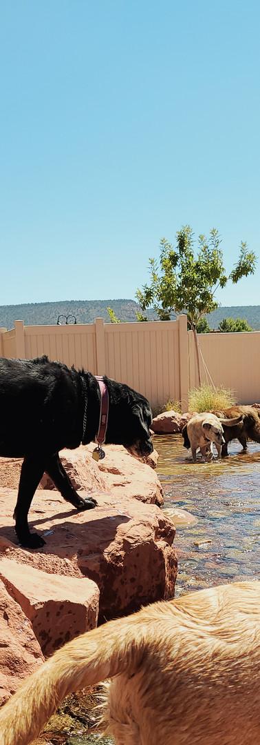 Play camp doggies!