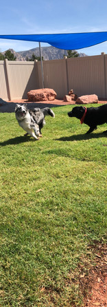 Shenzi being chased