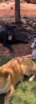 PlayCamp doggies lounging