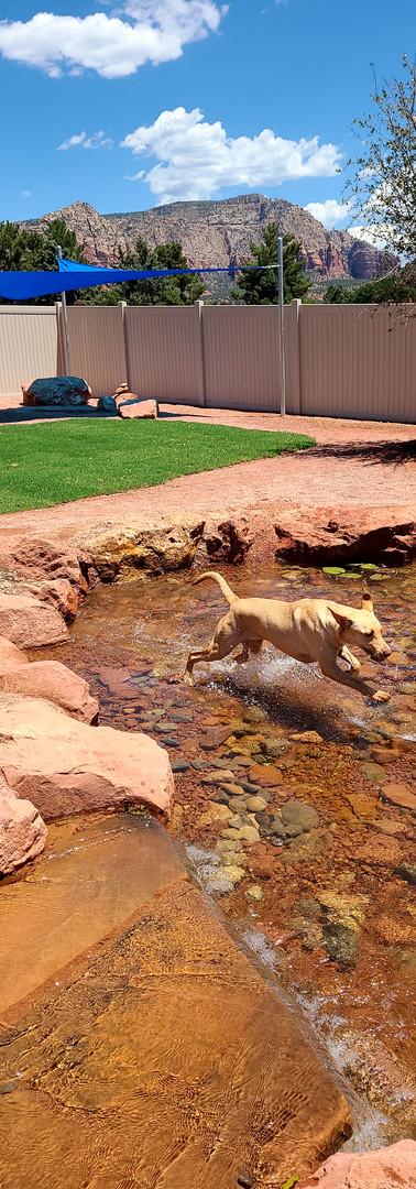 Junie running on water