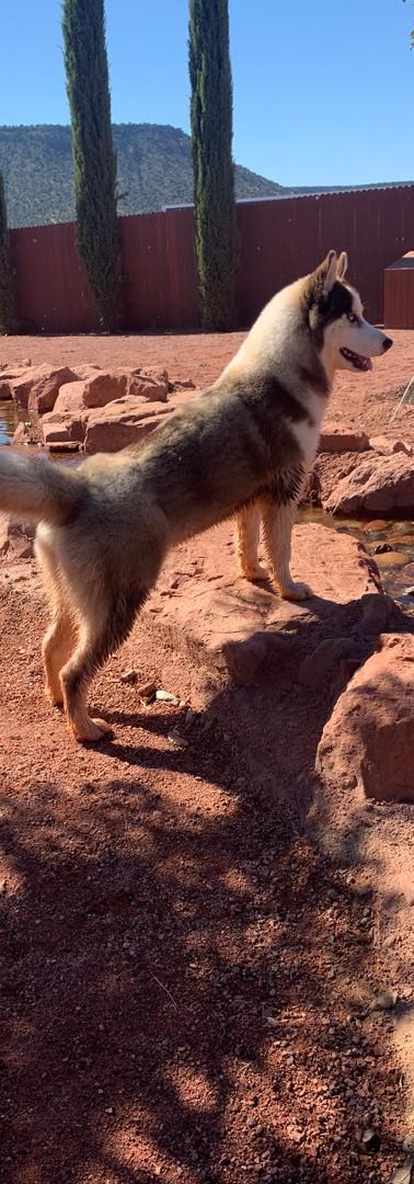 Freya on Pride Rock