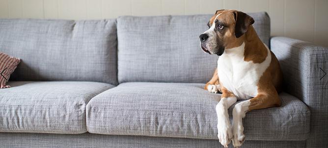 Sofa Cleaning.jpg