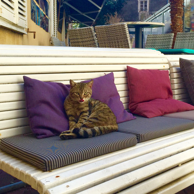 Zadar - just a cute cat enjoying the day