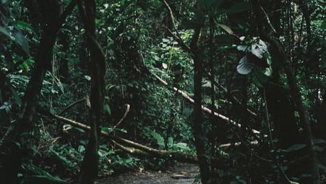 MÉXICO - Selva Palenque - 2015