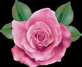 Pink_Rose_Transparent_PNG_Clip_Art.png