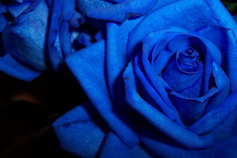 blue-roses-1-1407227.jpg